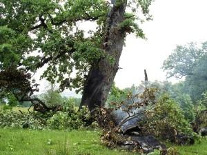 Copac trasnit