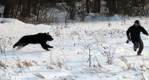 Urs suparat pe musafirii nepoftiti
