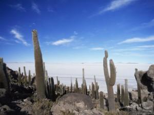 Cactusi giganti