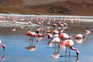 Flamingo pe lac