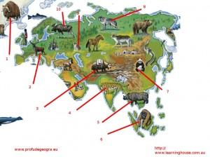 Fisa de evaluare pentru clasa a V-a (Animale Europa si Asia)