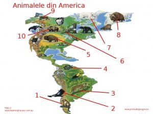 Fisa de evaluare pentru clasa a V-a (Animale America)