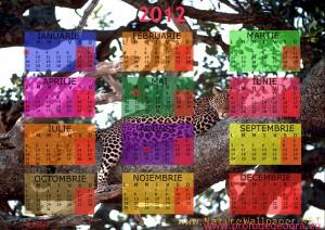 calendar 2012 animale salbatice