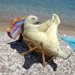 Urs polar la plaja