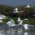 Imagine din delta Dunarii (Romania)