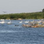 Imagine din delta raului Volga (Rusia)