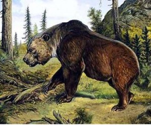 Ursus Speleus