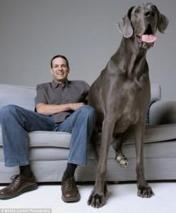 Cel  mai mare caine din lume1
