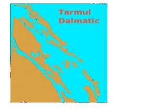 Tarmul  dalmatic