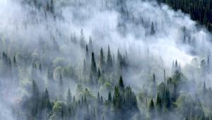 Paduri de conifere Rusia
