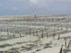 Ferma de alge