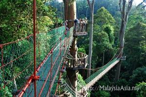 canopy-walk-danum