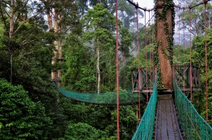 danum valley canopy
