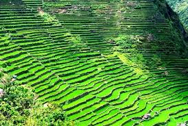 Banaue Rice Teraces Philippine