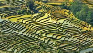 Honghe-Rice-Terraces-China