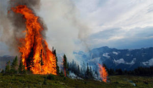 incendii naturale
