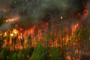incendii naturale padure