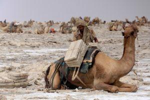 exploatare sare-Afar-Danakil