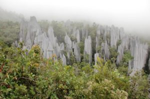 relief carstic pinnacles in gunung mulu