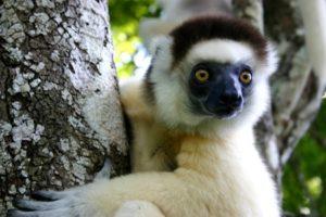lemurian in madagascar