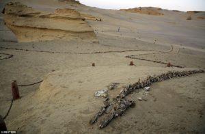 valea balenelor din egipt