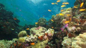 marea bariera de corali 3